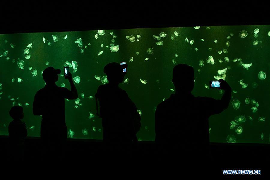 Visitors admire jellyfish at Manila Ocean Park