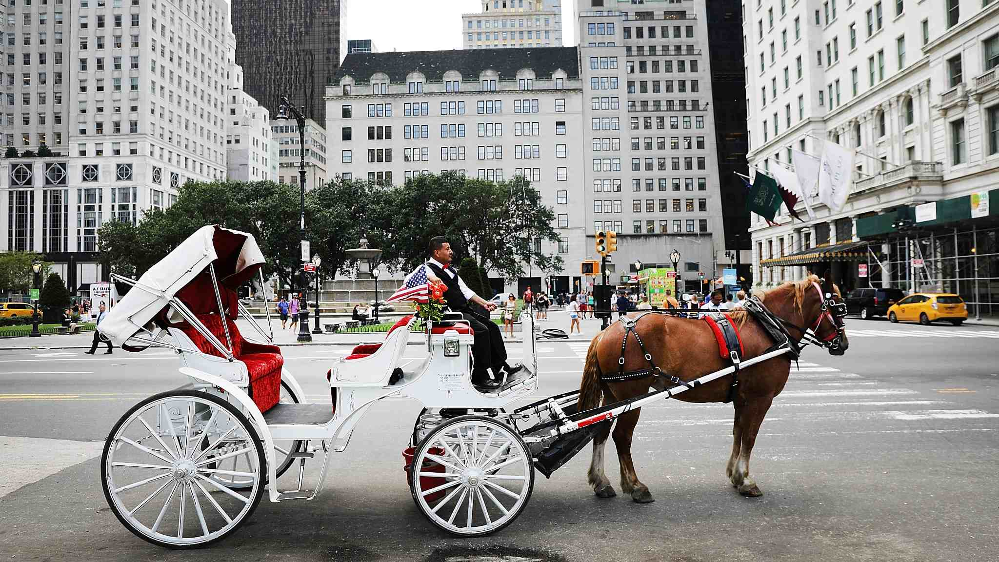 Carriage horses in NYC get a reprieve after heatwave