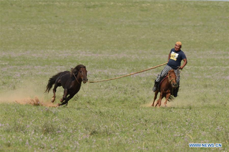 Herdsmen lasso horses at traditional fair in N China's Inner Mongolia