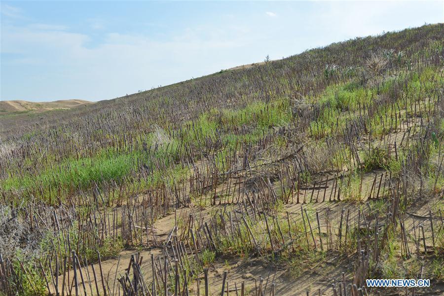 Across China: Turning desert into oasis