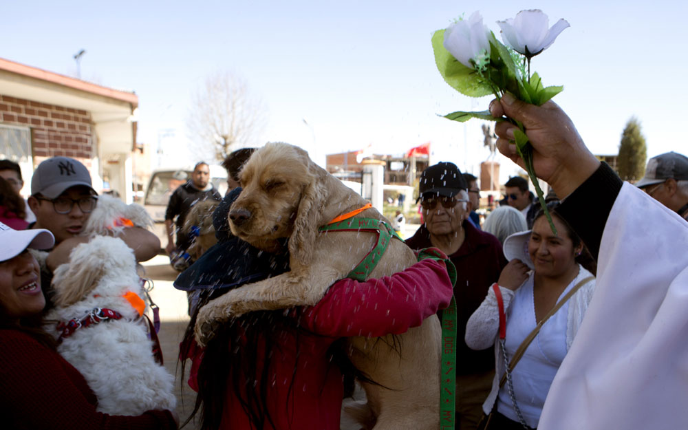 Dog day in Bolivia: Church honors patron saint of canines