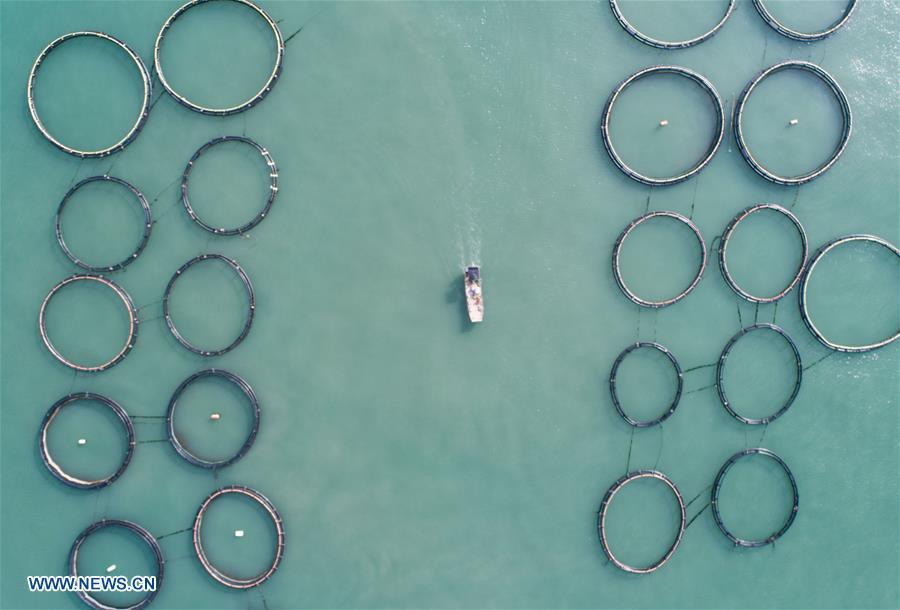 Mariculture zone in sea area of Nanji island in Wenzhou, E China's Zhejiang