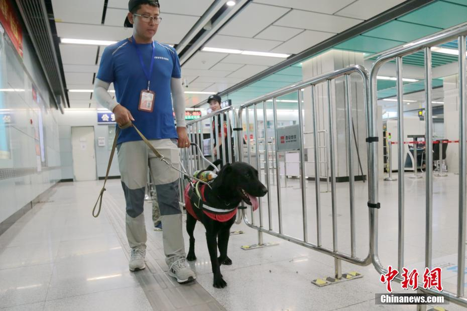 "Li Sai trains guide dog ""Hei Mei"" to take the subway on August 27, 2018, in Xi'an, Shaanxi Province. [Photo: Chinanews.com]"
