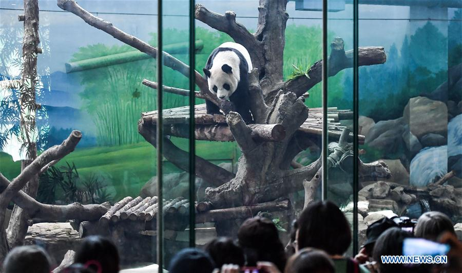 Giant pandas Yuan Yuan, Tuan Tuan celebrate birthday at Taipei Zoo