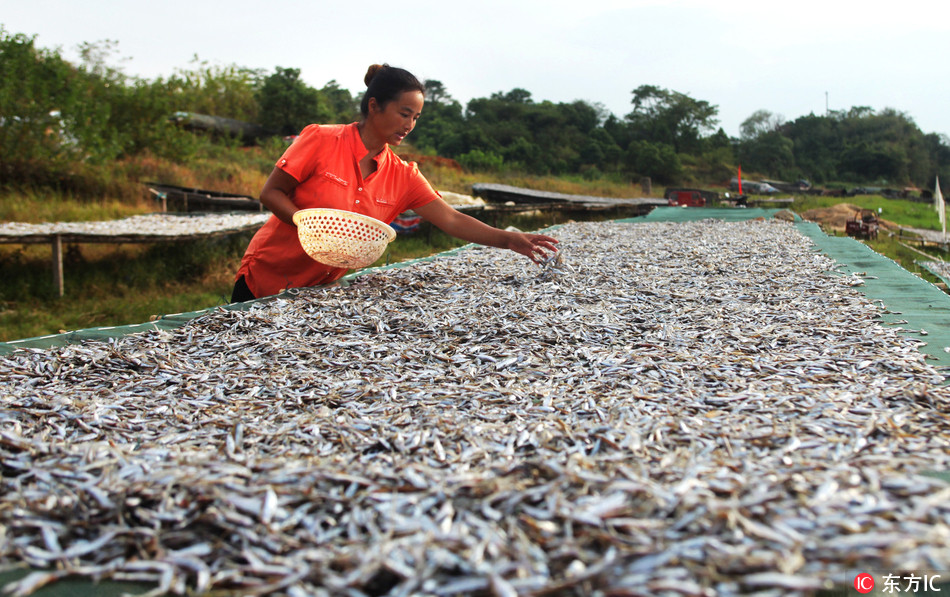 Farmers greet harvest season in Poyang Lake