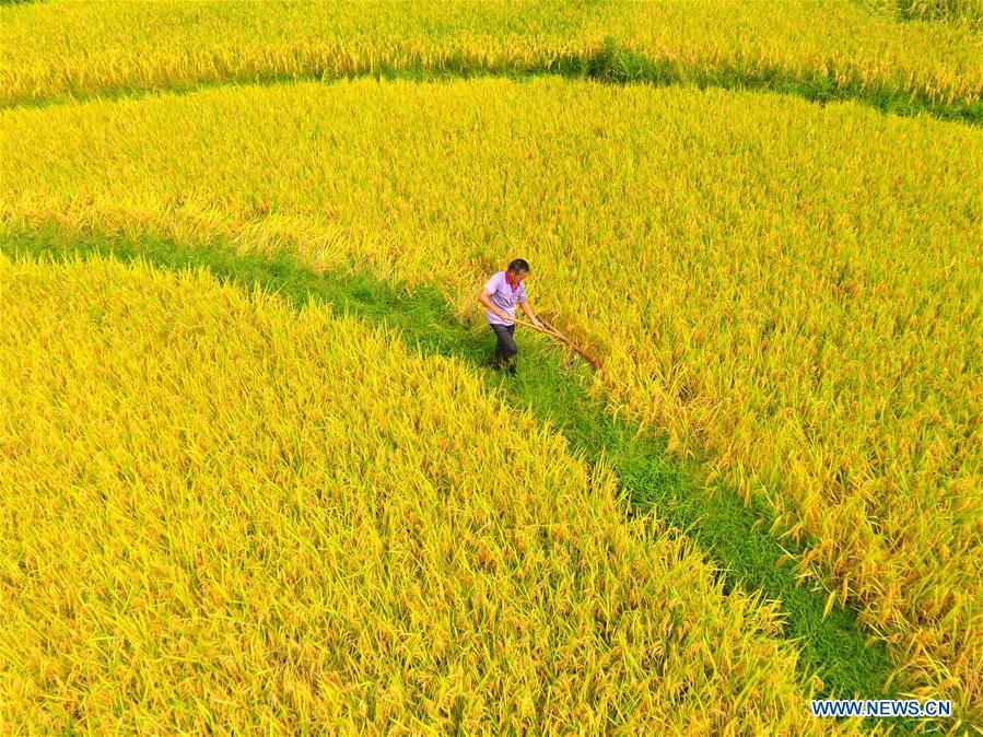 Autumn harvest underway across China