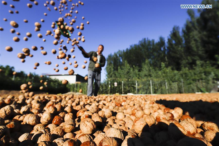 Farmers busy with autumn harvest across China
