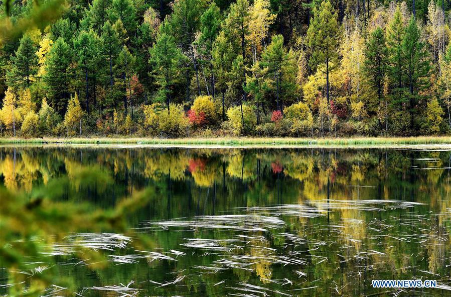 Autumn scenery of N China's Inner Mongolia