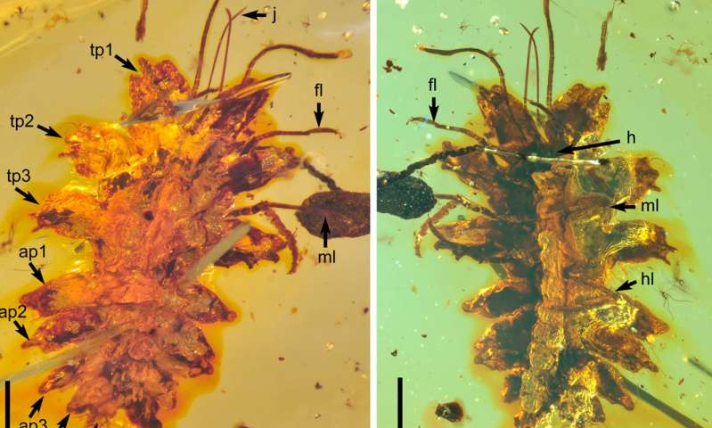 Chinese scientists find insect species mimicking liverworts 100-mln-yrs ago
