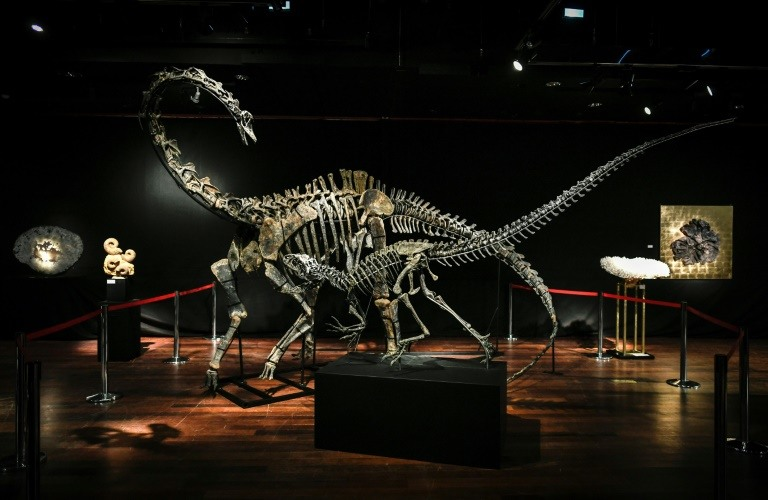 Two dinosaurs fetch over 1.4 million euros each in Paris sale