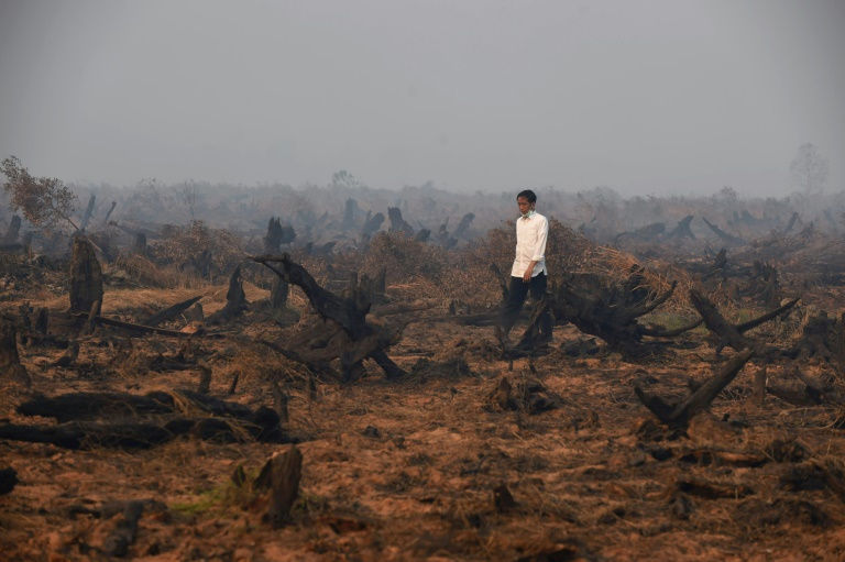 Rash of forest fires breaks out in Indonesia