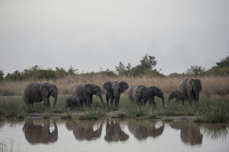 Pendjari park hopes to be new elephant sanctuary in West Africa