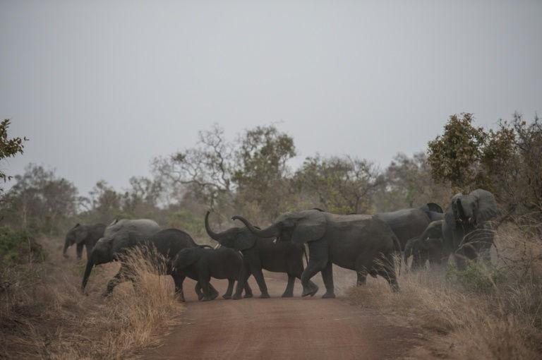 Benin's Pendjari National Park comes back to life