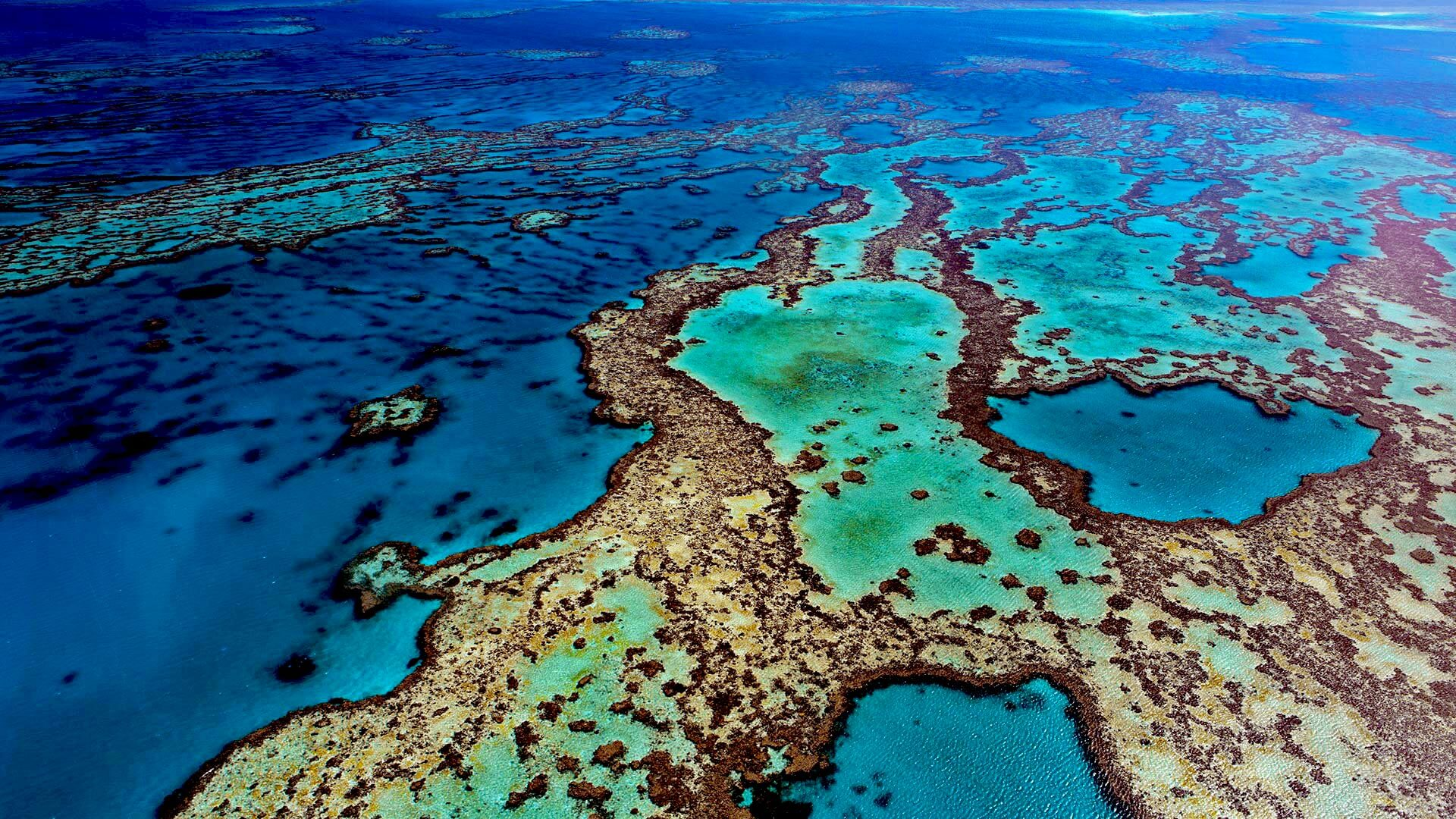 Save The Great Barrier Reef: Australia Offers Cash For Great Ideas