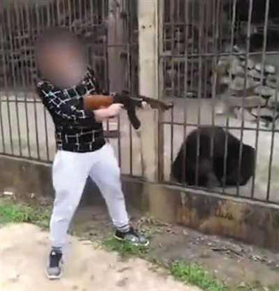 Chinese who killed bear in Myanmar apologizes to internet users