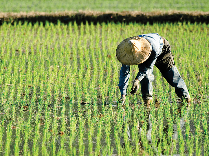 1 million new farmers to be trained in China in 2018