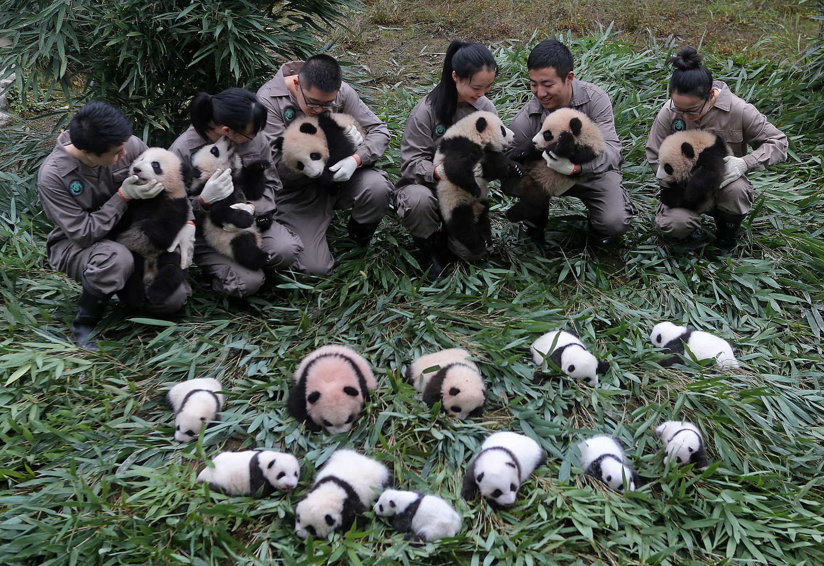 "Giant panda awarded ""Asia Game Changer"""