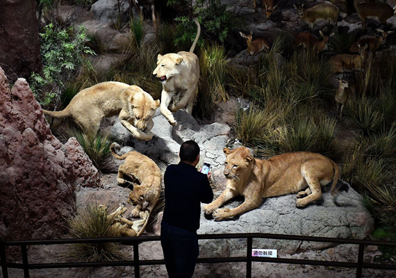 Photo: Behring Natural History Museum opens in East China