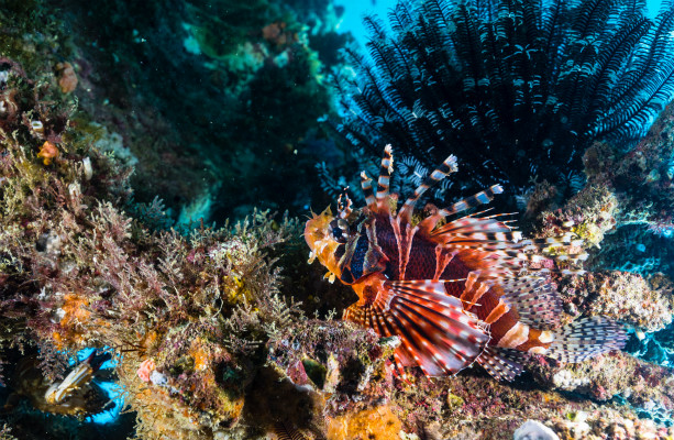 Chinese scientists plant corals undersea