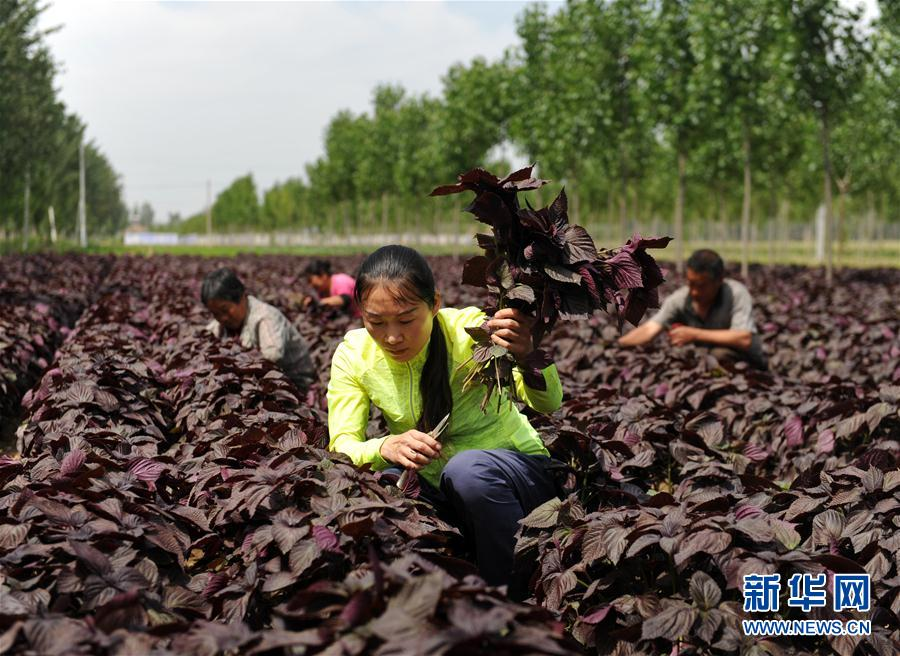 Xi leads China to win world's biggest poverty-relief battle