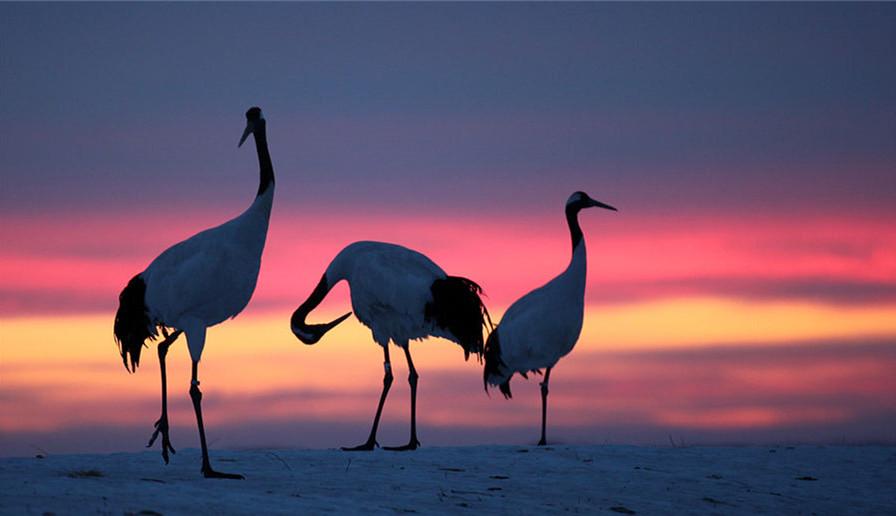 World Environment Day: Images of beautiful China