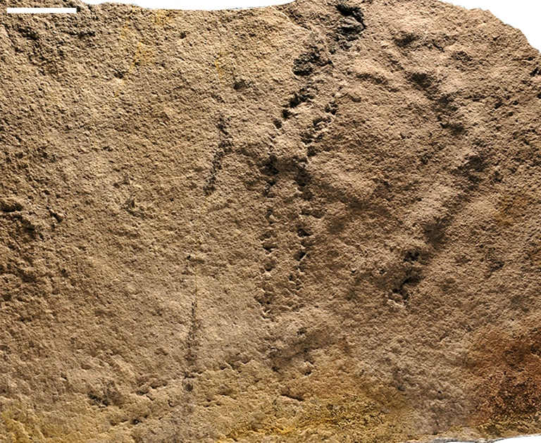 Earliest animal footprints found in China: study