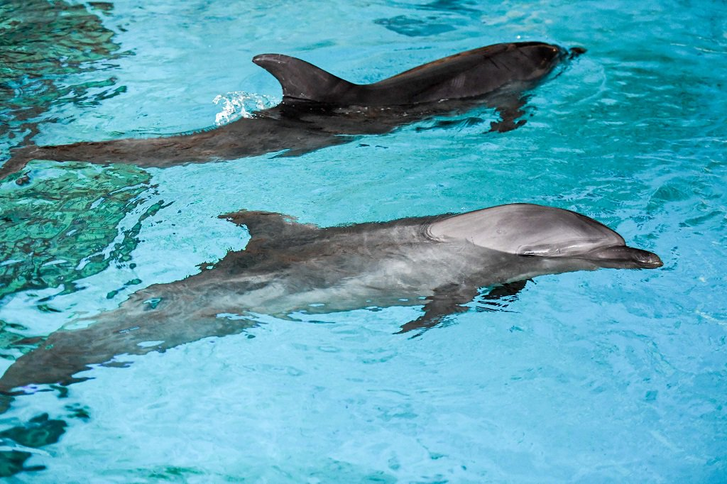 """Dolphins give each other """"names"""" to recognize friends: study"""