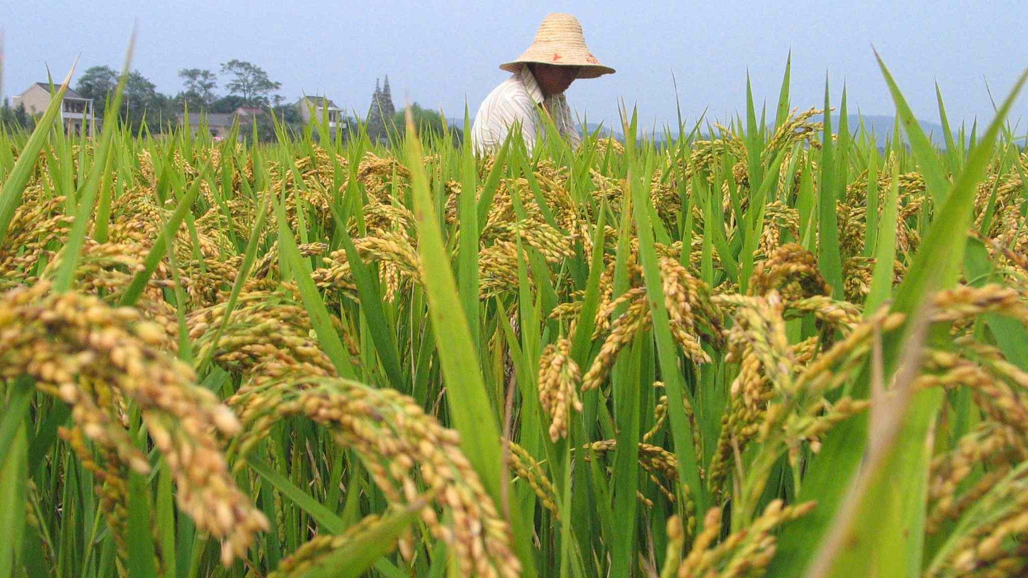 Chinese rice bran oil wins International Superior Taste Award 2018