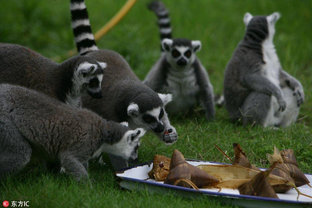 Animals enjoy Zongzi on Chinese Dragon Boat Festival