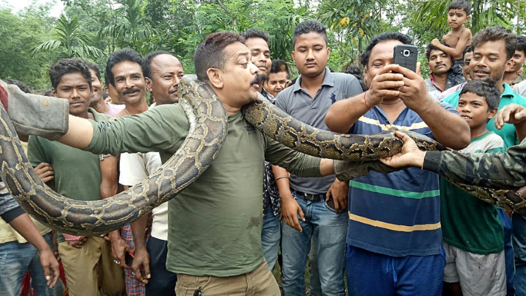 Python selfie puts Indian forest ranger in tight spot