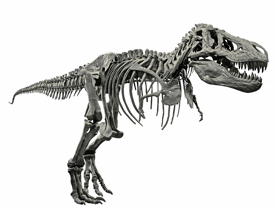 T. Rex dinosaur unable to stick out tongues: study