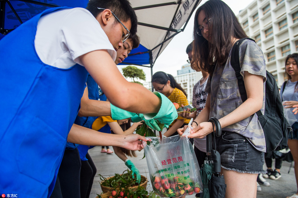 Lychee harvest in Shenzhen University, free for students