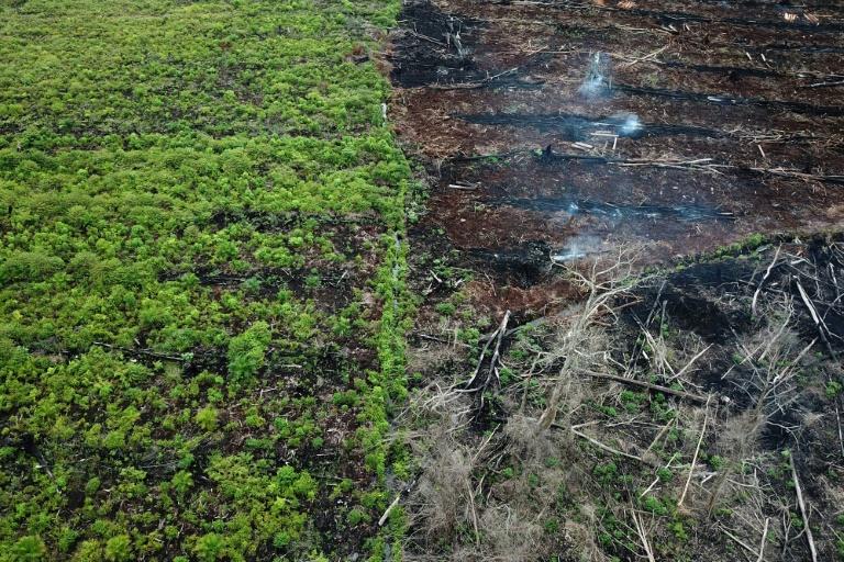 Palm oil 'decimating' wildlife, solutions elusive: report