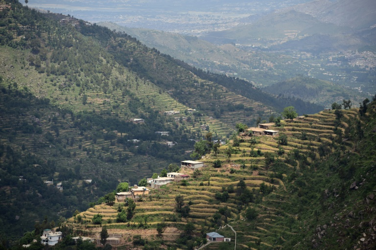 'Green gold': Pakistan plants hundreds of millions of trees