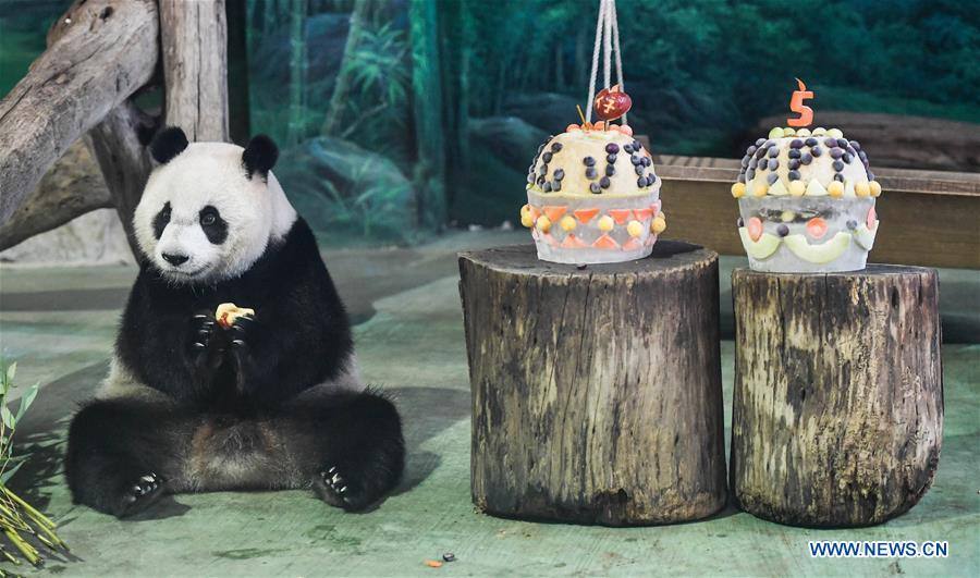 Taiwan celebrates giant panda's birthday