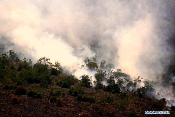Forest fire breaks out in Ogan Komering Ilir, Indonesia