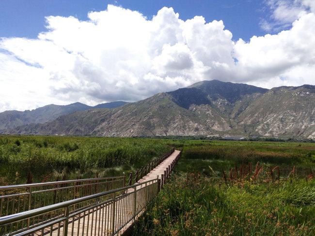 西藏湿地.jpg