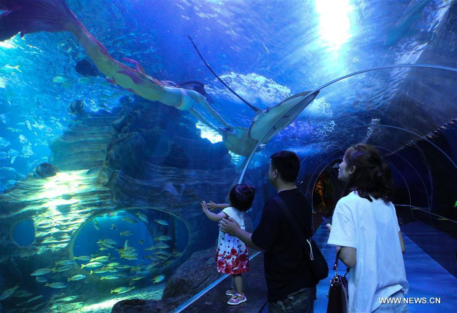 Visitors enjoy mermaid show at aquarium in Guiyang, China's Guizhou