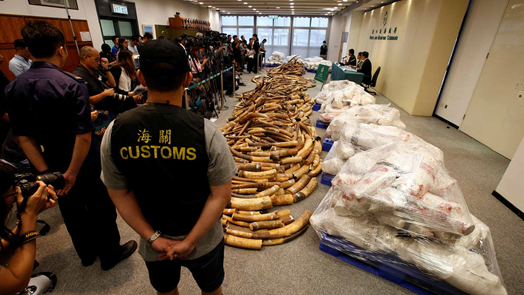 Wildlife smuggling through airports found on the rise