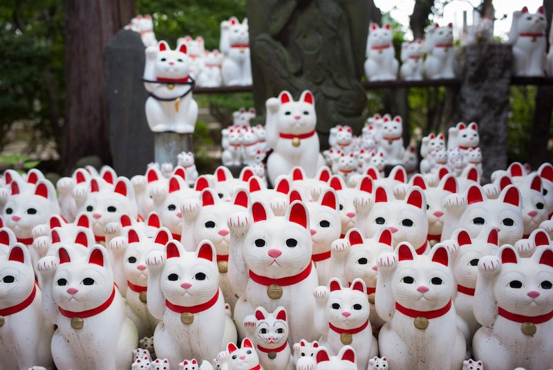 International Cat Day: Tokyo 'lucky cats temple'  welcomes visitors
