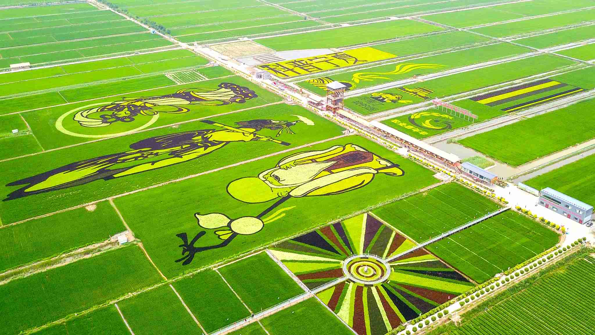 Paddy field paintings in Ningxia draw tourists