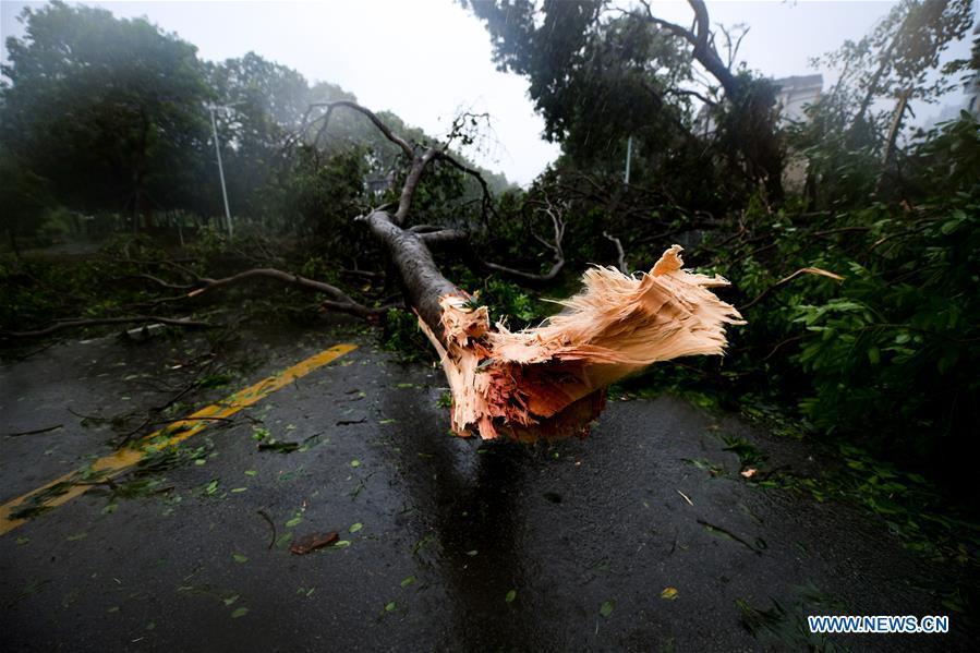台风 2死.jpg