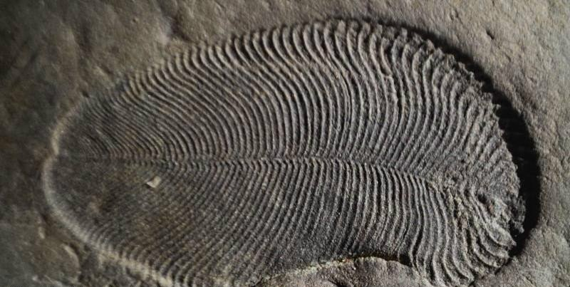 Scientists identify earliest known animal 558 mln years ago
