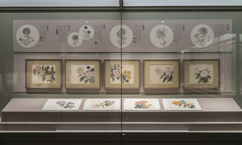 Autumn charm paintings of Chrysanthemums on show