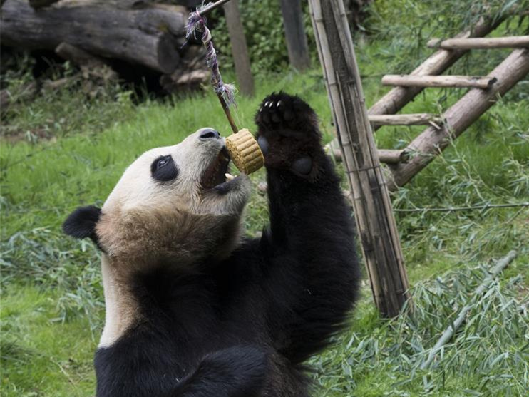 Animals celebrate Mid-Autumn Festival with special moon cakes