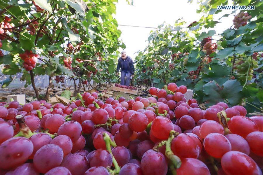 Harvest celebrated around China to mark Farmers' Harvest Festival