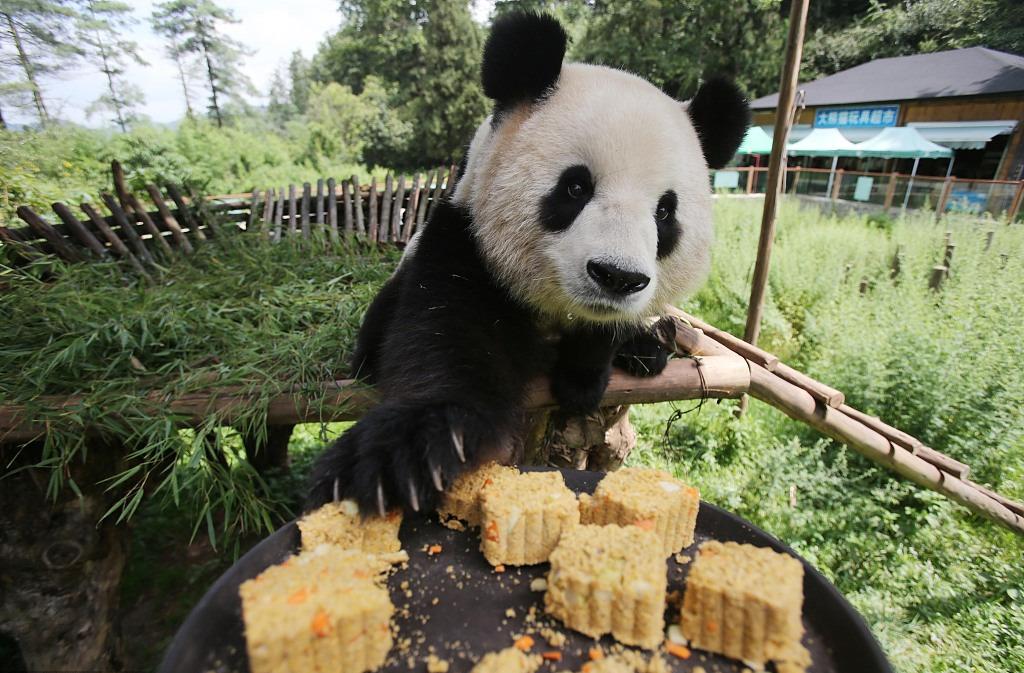 Even animals enjoy mooncakes