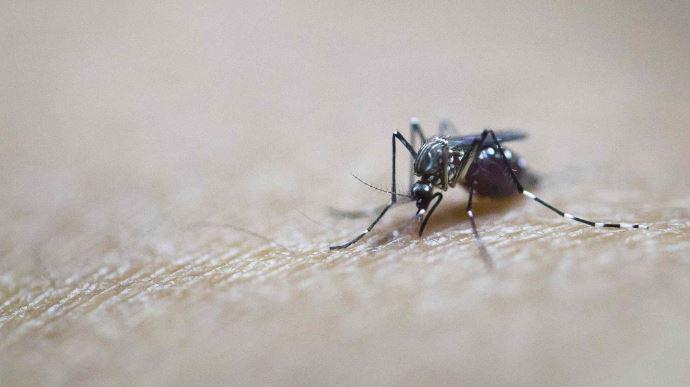 New study finds Zika vaccine can treat brain tumors