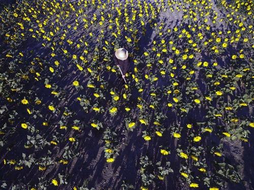 Photos show harvest season in Zunhua City, N China's Hebei