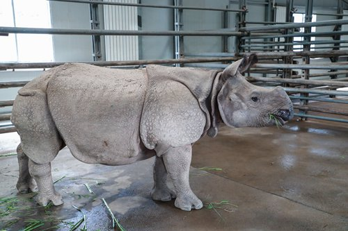 China, Nepal to protect endangered one-horned rhino